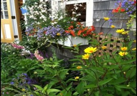 Container Gardening for Practically Green