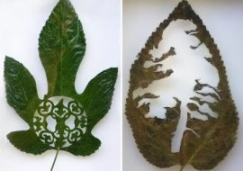 A Leaf Becomes Art in Spain
