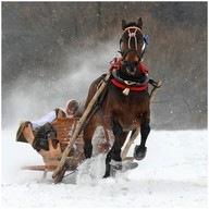 10sound sleigh