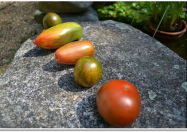 Meatless Monday-5 More Minutes of Summer Tomatoes, Please!