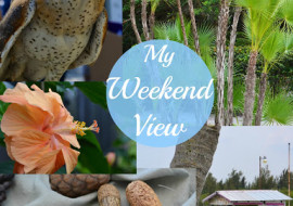 5 Reasons to Love My Weekend View No. 32
