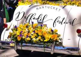 Nantucket Daffodil Festival Welcomes Spring