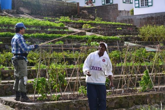 Saba-farm-caribbean