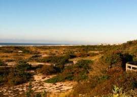 The Sunken Forest of Fire Island