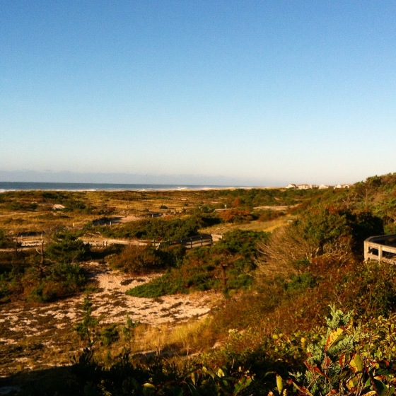 sunken forest fire island new york