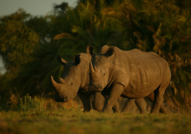 Holiday Gifting #JustOneRhino