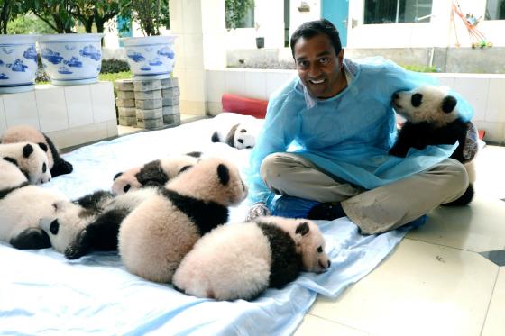 The New Wild Pandas