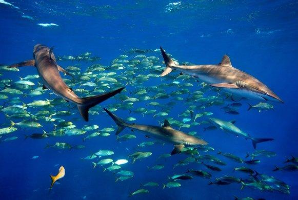 coral reefs of cuba