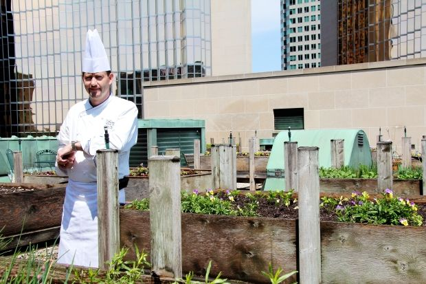 Fairmont hotel chef strikes a pose in the roof top garden.