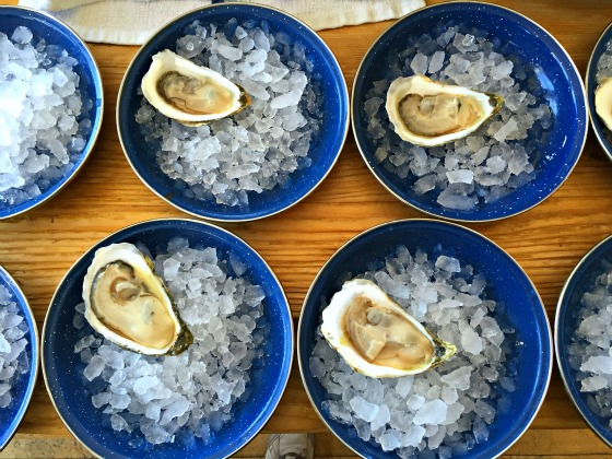 maine-oyster-culture-greenwithrenvy