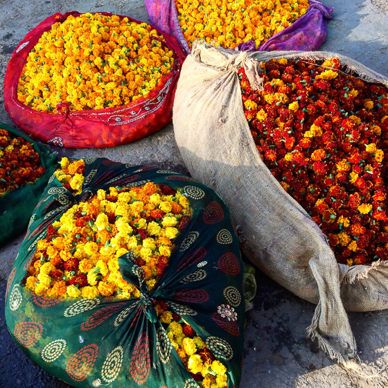 Flower market in Jaipur