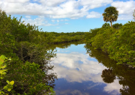 Eco-Tourism in South Florida State Park