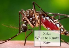 The Zika Environment-What to Know Now