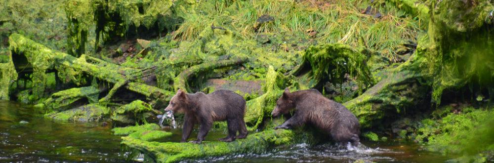 Alaska_Header_Baird-Glacier_alison-abbott_greenwithrenvy.com