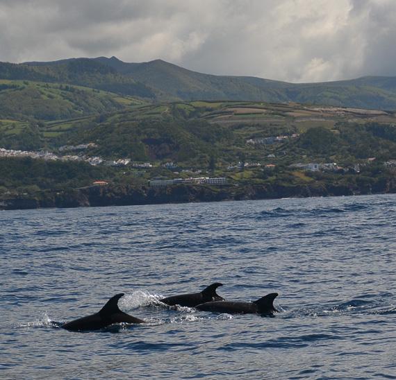Azores, Sao Miguel-Whale watch Futuretourismo