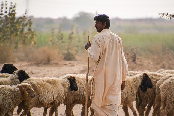 That desert in Rajasthan