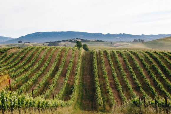 Sustainable wine at cline family cellars