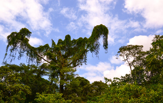 Top 14 Costa Rica Ecotourism Experiences - Green With Renvy