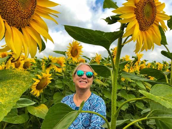 Sunflower fields in outside kiev