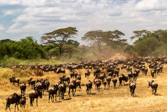 Tanzania tourist attraction Serengeti National Park