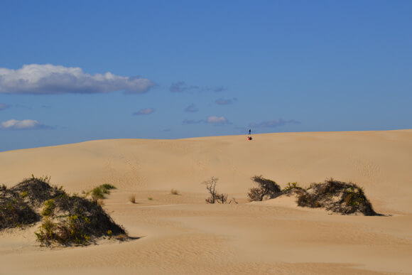 Sand dunes Jockey Ridge North Carolina