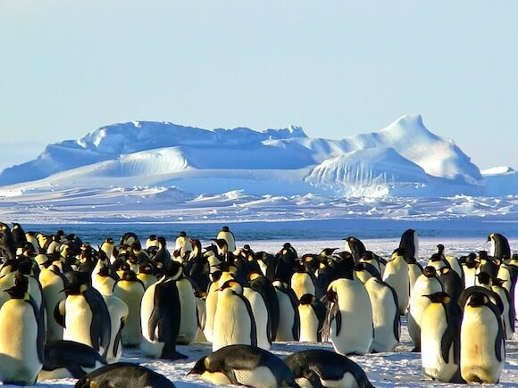Top Baby Boomer Travel destinations-Antartica