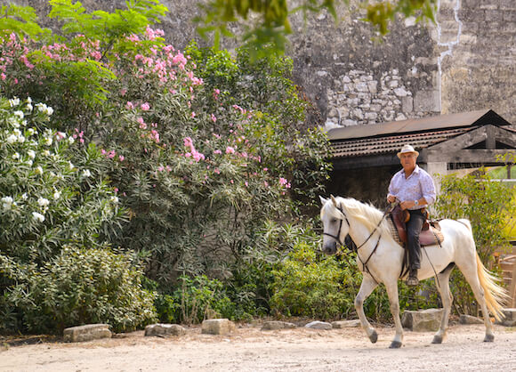 Man on horse in Camargue