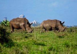 A Nairobi Safari and Top City Attractions