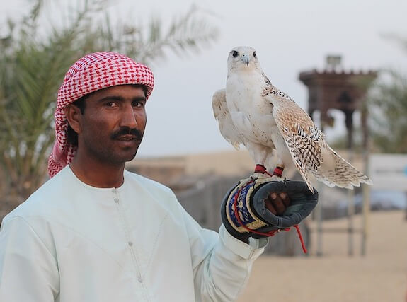 man with falcon