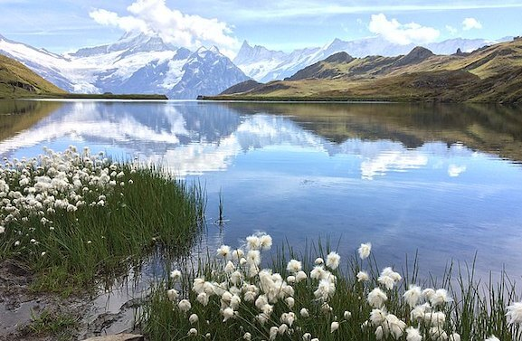 mountains, lake and spring flowers