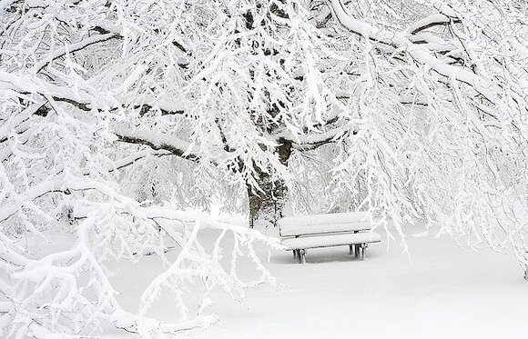 snow tree and bench