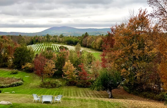 landscape and three chairs overlooking a vineyard